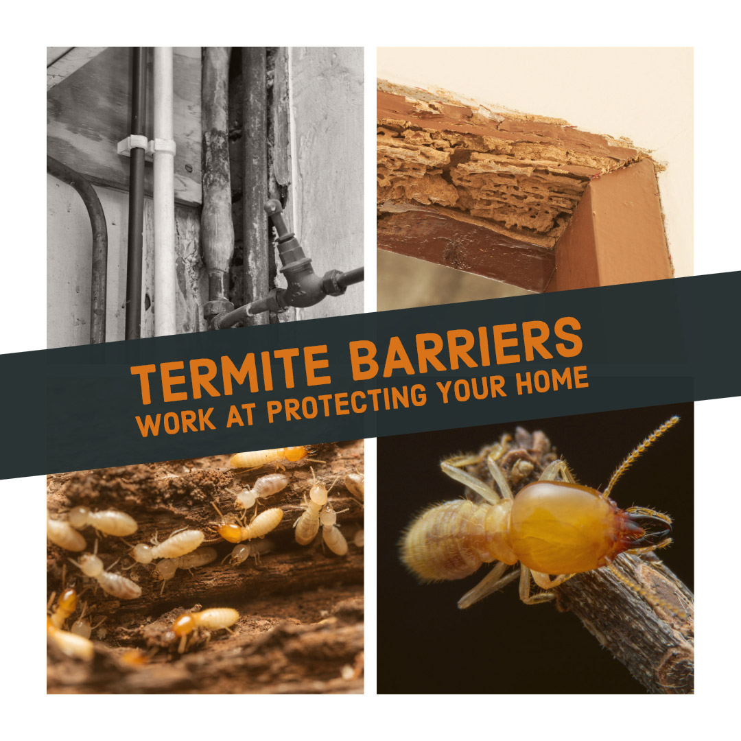 Termite Barriers Protect Your Home