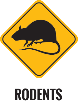 Rodent Control Gold Coast