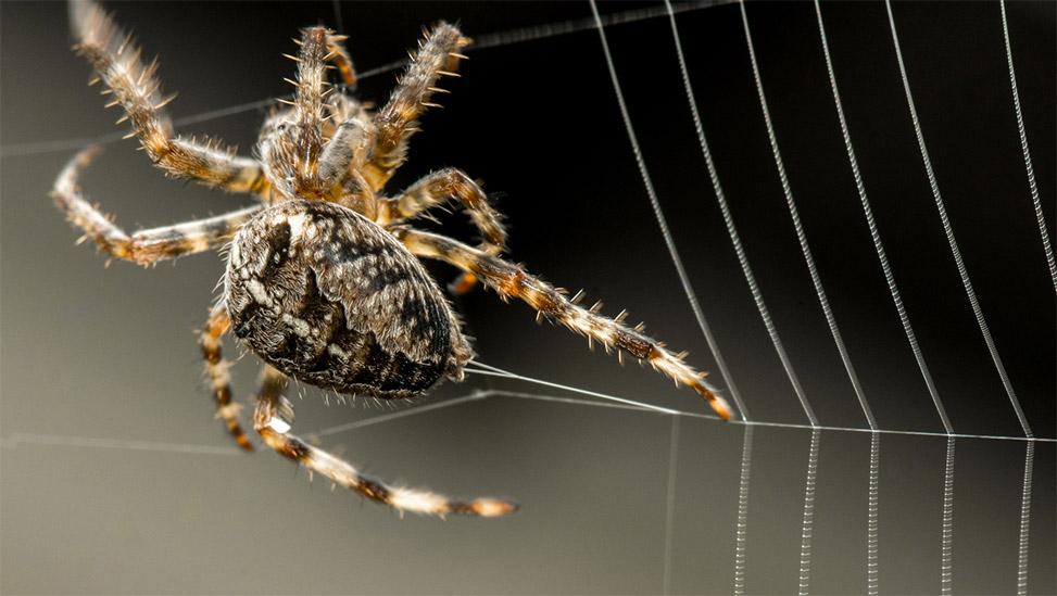 Spider-Making-Web.jpg