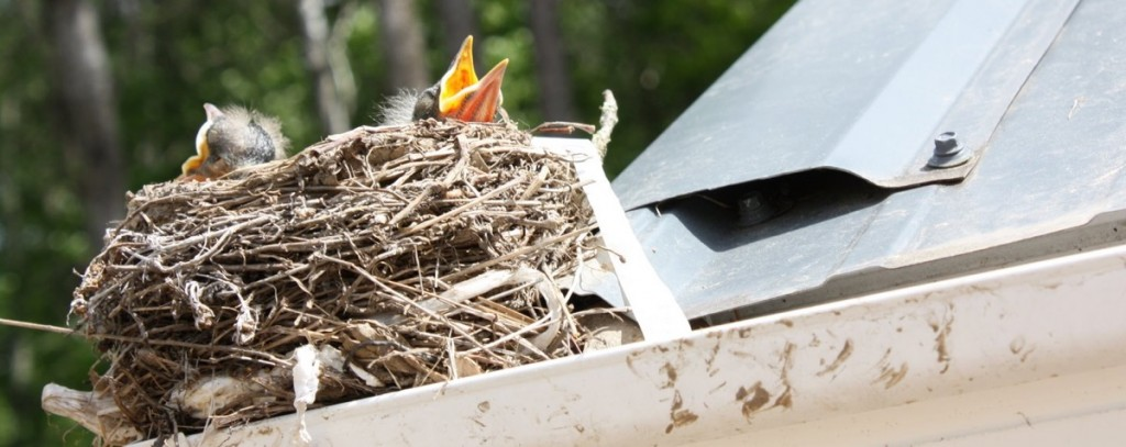 Gold Coast Bird Control And Removal