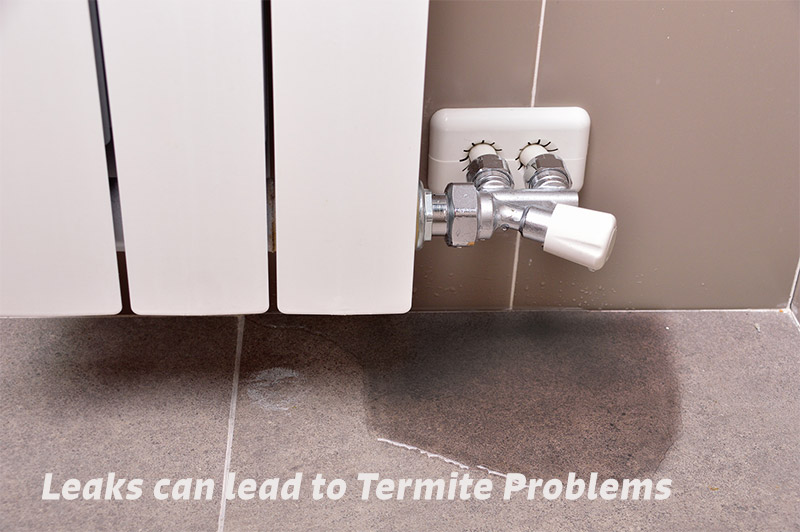 Leaks Can Lead to Termite Problems